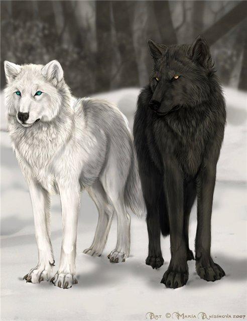 Cuento: Los Dos Lobos....