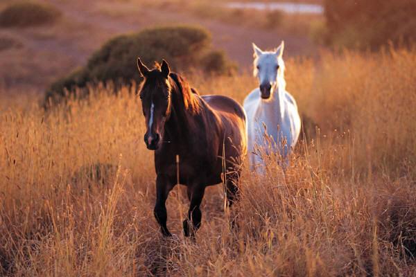 el caballo perdido del anciano sabio